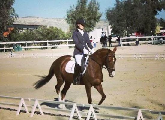 Doma - escuela de equitacion con picadero cubierto