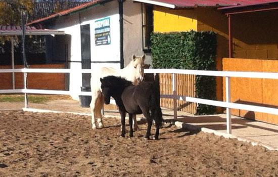 Zona_veterinaria Donde montar a caballo en zaragoza